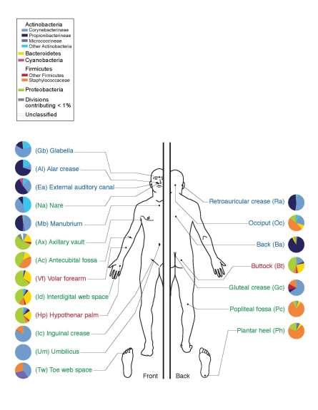 Microbiome of Human Skin