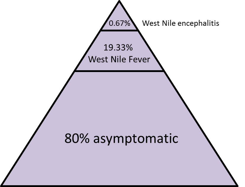 a primer on west nile virus | k.d.shives, Skeleton