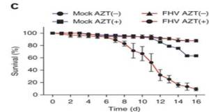 Survival of wild-type files fed 93 mM AZT in sucrose daily (AZT(+)) or not (AZT(-)) and fed Tris-HCL (mock) or FHV viral stock (FHV) once, monitored daily for 16 d after FHV feeding (horizontal axis). Data are from one experiment representative of four experiments
